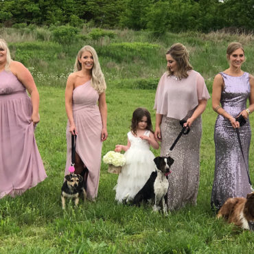 Bridesmaids carry adoptable shelter pups down the aisle