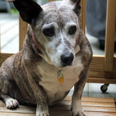 Maine woman creates a 'retirement home' for senior dogs