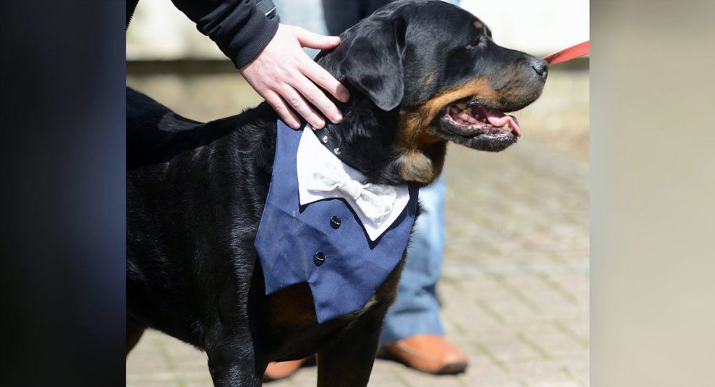 Dog Best Man